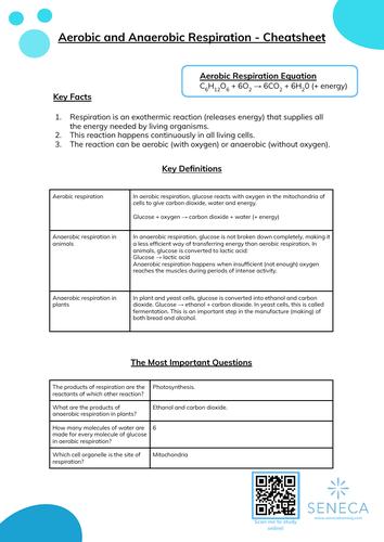 Respiration Worksheet & Cheatsheet for GCSE
