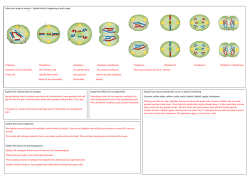 Edexcel Biology(B) A level Topic 2 Revision Mat