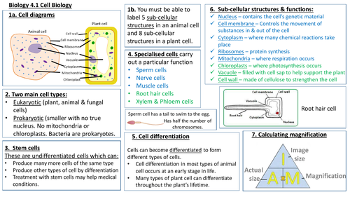 AQA KS4 Unit B4.1 Cell Biology Knowledge Organiser/ Revision Mat