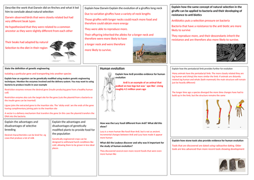 GCSE Biology topic 4 revision mat Natural Selection and Genetic modification Edexcel