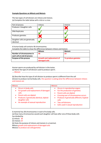 New GCSE Revision Sheets on Mitosis and Meiosis