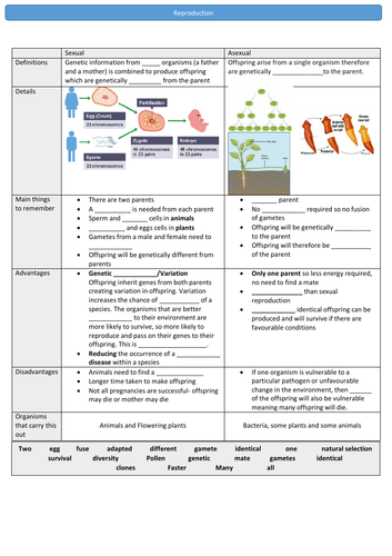 GCSE 9-1  Sexual and asexual reproduction, selective breeding, cloning and genetic engineering