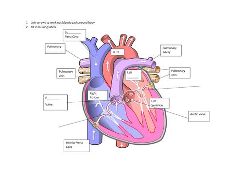Heart Starter - BIOLOGY GCSE