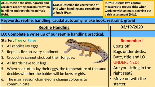 Reptile Handling Write Up - Animal Care BTEC
