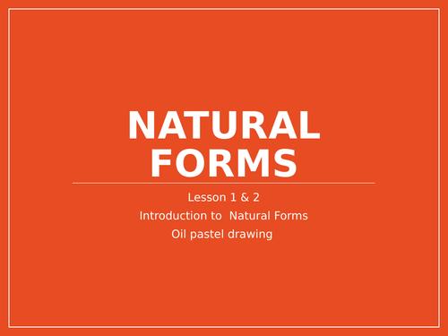 1 term - natural forms mixed media drawing project - KS3