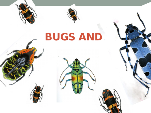 Bugs and Insects art project suitable for home learning