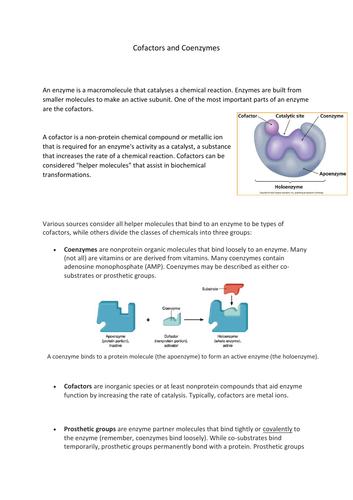 Enzymes - Cofactors and Coenzymes