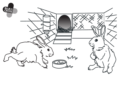 Pets -Blue Cross resources for EYFS and KS1