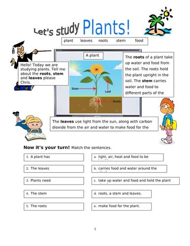 Plants worksheet