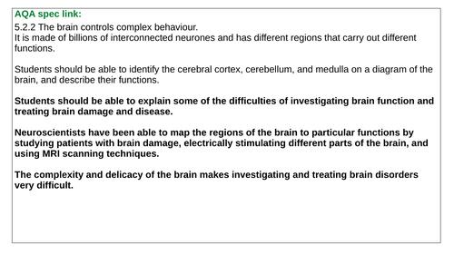 B10.4 The Brain