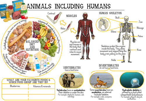 Animals including Humans Y3 Knowledge Organiser