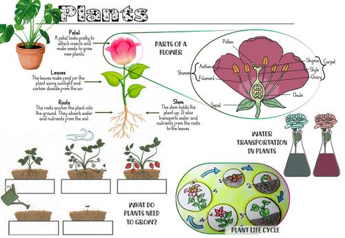 Plants Y3 Knowledge Organiser