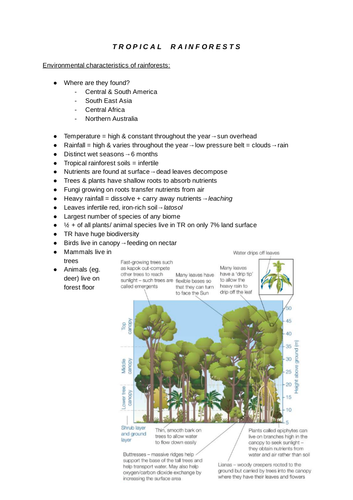 GCSE Geography- Tropical Rainforests (Physical)