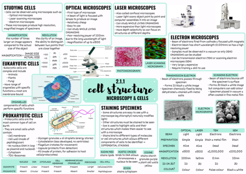 OCR ALEVEL BIOLOGY CELL STRUCTURE