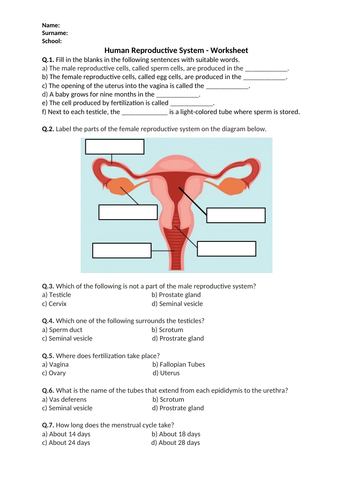 Human Reproductive System - Worksheet | Distance Learning