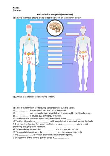 Human Endocrine System - Worksheet | Distance Learning