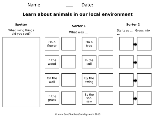 Food Webs KS1 Worksheets and Lesson Plan (Online Activities)