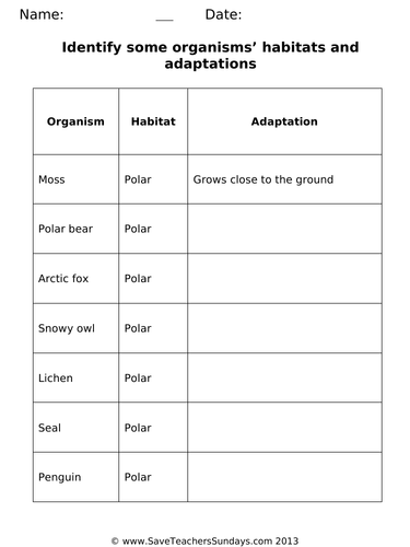 Habitats and Adaptations KS1 Lesson Plan and Worksheets (differentiated)