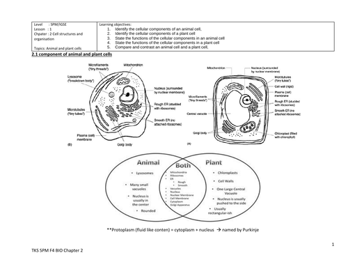 Revision Notes (Complete) Biology Animal and plant cells (IGCSE or equivalent)