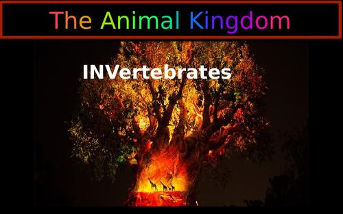 The Animal Kingdom -Invertebrates