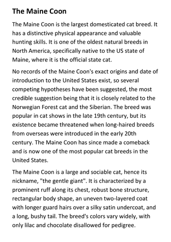 The Maine Coon Handout