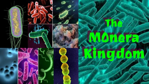 The Monera (Bacteria) Kingdom