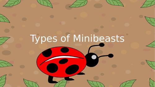 Types of Minibeast PowerPoint