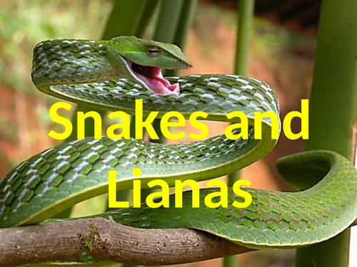 SNAKES AND LIANAS - RAINFOREST GAME