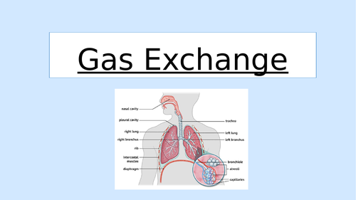 Gas Exchange Revision