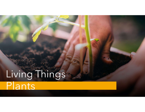 Unit on Plant - Living Things