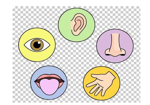 Five senses display