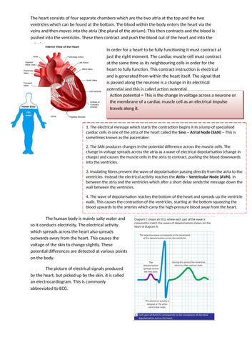 Heart Electricity