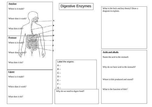 Digestion and enzymes revision mat