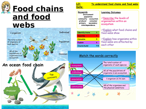 Food chains and food webs