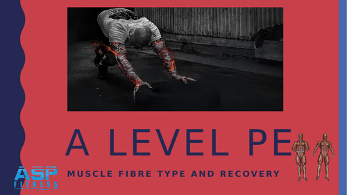Muscle fibres and recovery A level PE