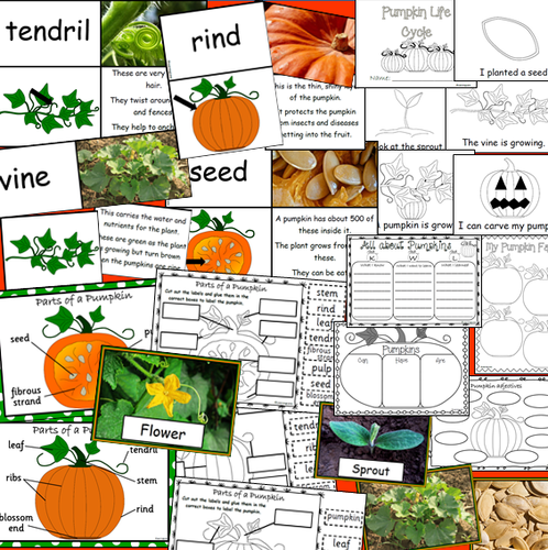 All about Pumpkins- Pumpkin Investigation Unit PLUS Life Cycle