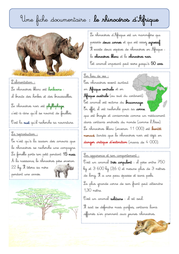 (French) Fiche documentaire - Le rhinocéros d'Afrique (animal info about the rhino)