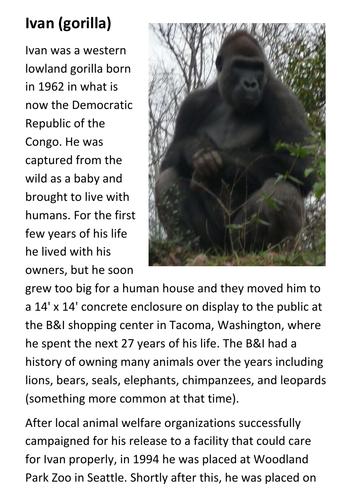 Ivan the Gorilla Handout