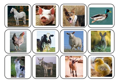 Farm animals photos and words matching - Autism/ASC/SEN/English