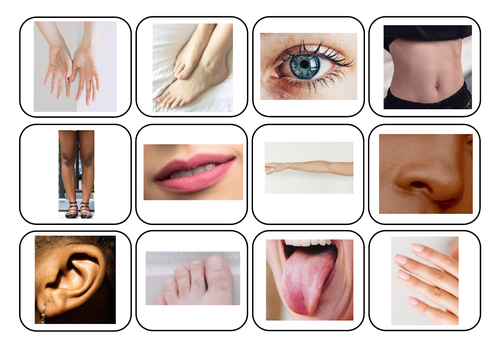 Body parts photos and words matching - Autism/ASC/SEN/English