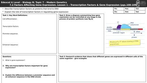 Edexcel Biology B A Level. Topic 7 - Modern Genetics. 7.2 Factors Affecting Gene Expression