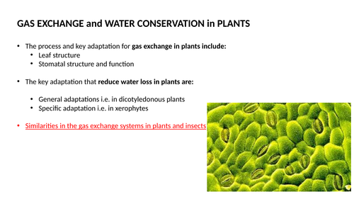 Gas exchange and transport in plants