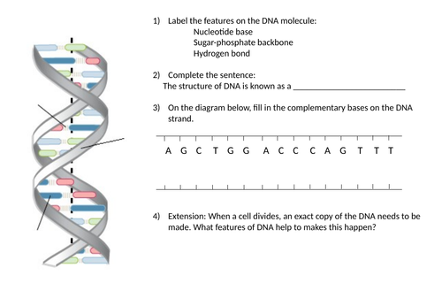 AQA GCSE Biology (9-1) B13.4 - DNA and the genome FULL LESSON