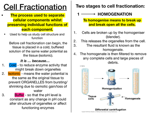 Cell fractionation - aqa a-level biology