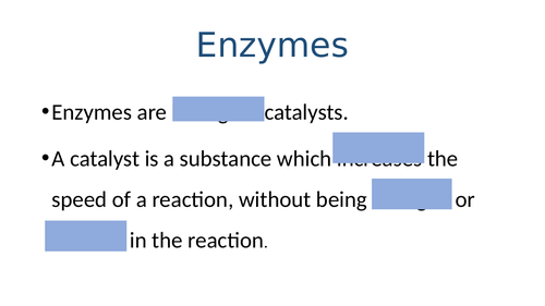 GCSE Biology: Enzyme Activities