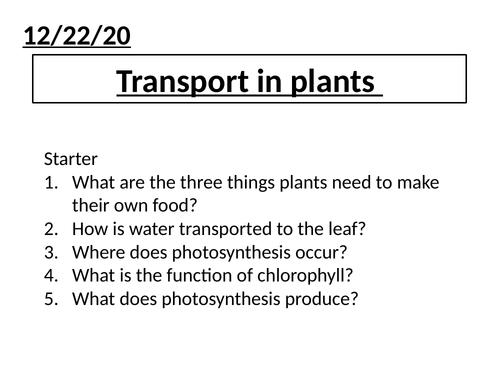 Transport in plants KS3