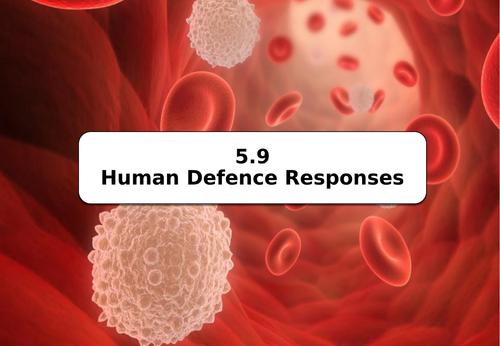 AQA GCSE B5.9 Human Defence Responses (NEW SPEC)