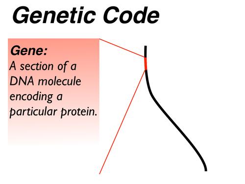 Genetic_Code_Transcription