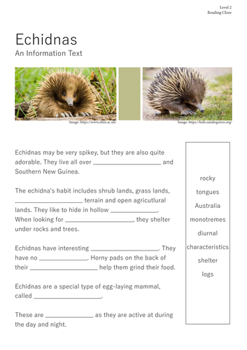 Echidna Information Text - Reading Comprehension