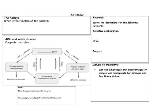 The kidney - summary worksheet (HT)